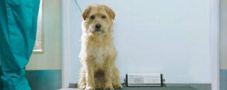 PDSA   Saving Pets Changing Lives