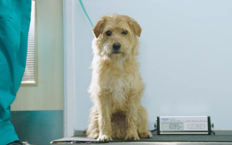 TV Commercial production pdsa | saving pets changing lives